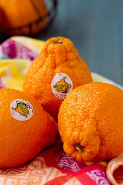 Sumo-Tangerine